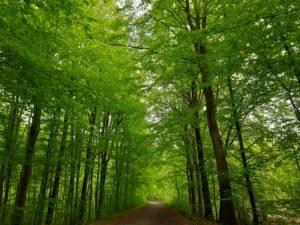 Lauschen - dem Rauschen der Bäume im Wald im Maigrün
