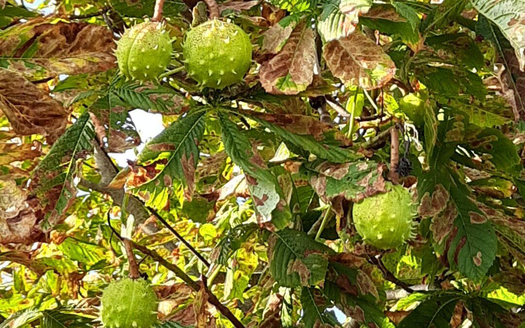 Kastanien-Freude – Verbundenheit mit der Natur